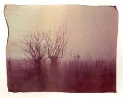 in the fog by kuru93