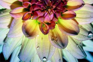 :: Colors :: by Liek