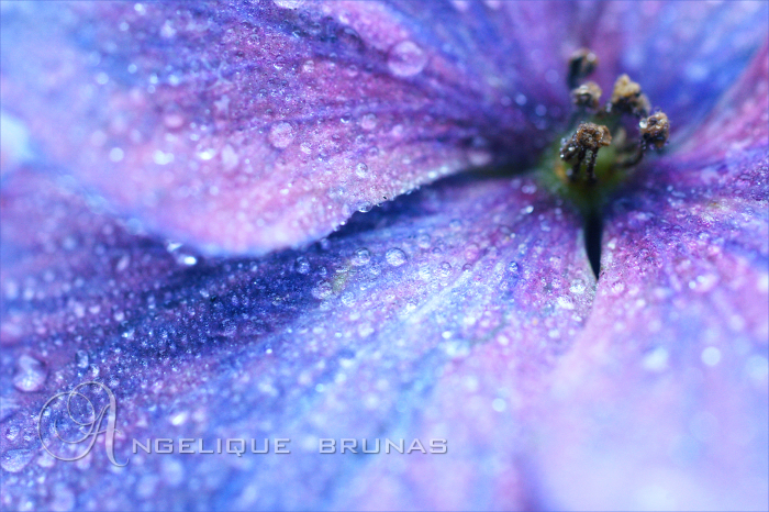 :: Birth of rain :: by Liek