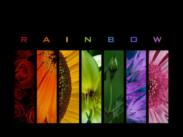 :: Rainbow WP :: by Liek