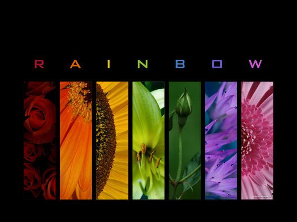 :: Rainbow WP :: by Liek