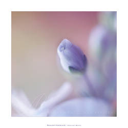 :: Shallow pastels ''' :: by Liek