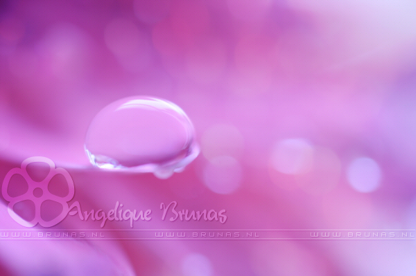 :: Pink ':: by Liek