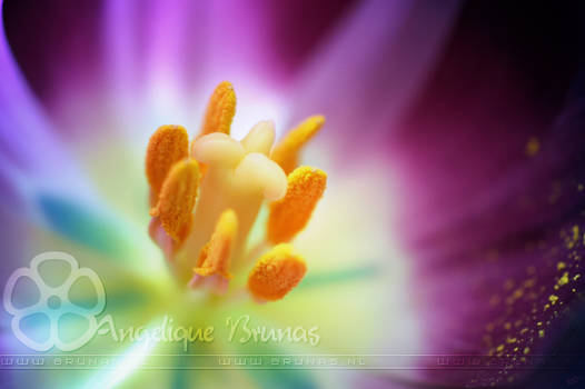 :: Flower' :: by Liek