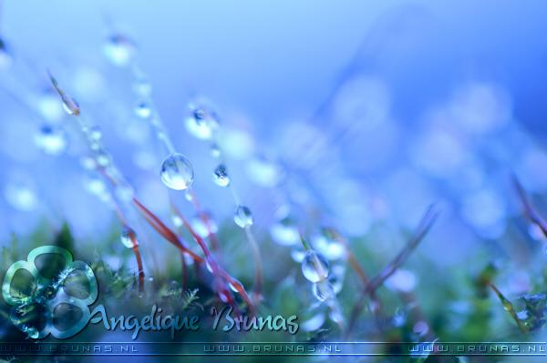 :: Planet moss''' :: by Liek