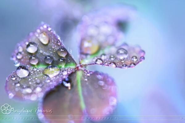 :: Fresh morning :: by Liek