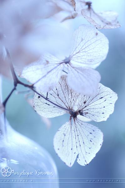 :: Botteled beauty :: by Liek