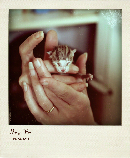 :: New life :: by Liek