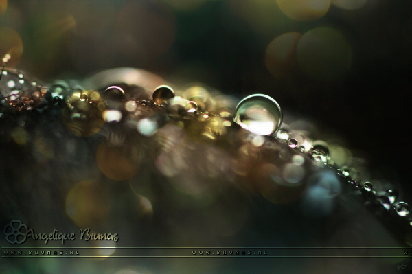 :: Light in the dark. :: by Liek