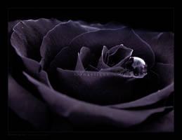 :: Dark rose :: by Liek