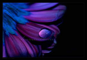 :: Purple' :: by Liek