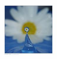 :: Flower head :: by Liek