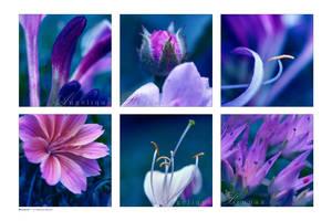 :: Bouquet :: by Liek
