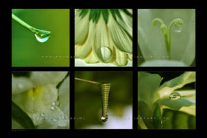 :: Green :: by Liek