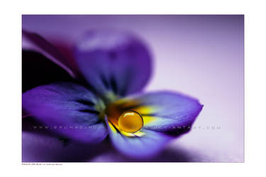 :: Violets are blue' :: by Liek