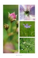 :: Spring :: by Liek