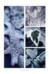 :: Winter ::