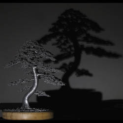 #bonsai #tree #shadow by kaitrees