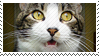 DA Stamp - Syrus is Shocked 0001