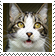 DA Stamp - Syrus is Shocked 0004