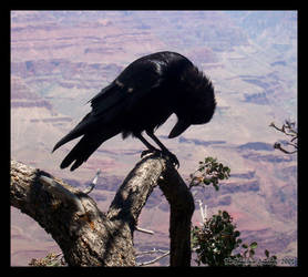 Saddened Bird by phantompanther