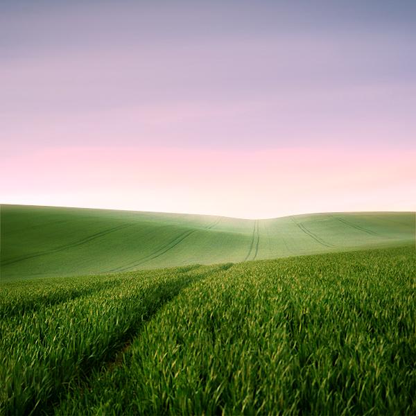 Through the Field by P0RG