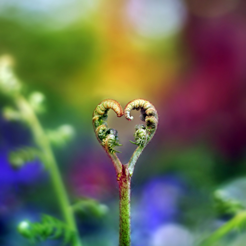Love Nature Images The Nature of Love by P RG