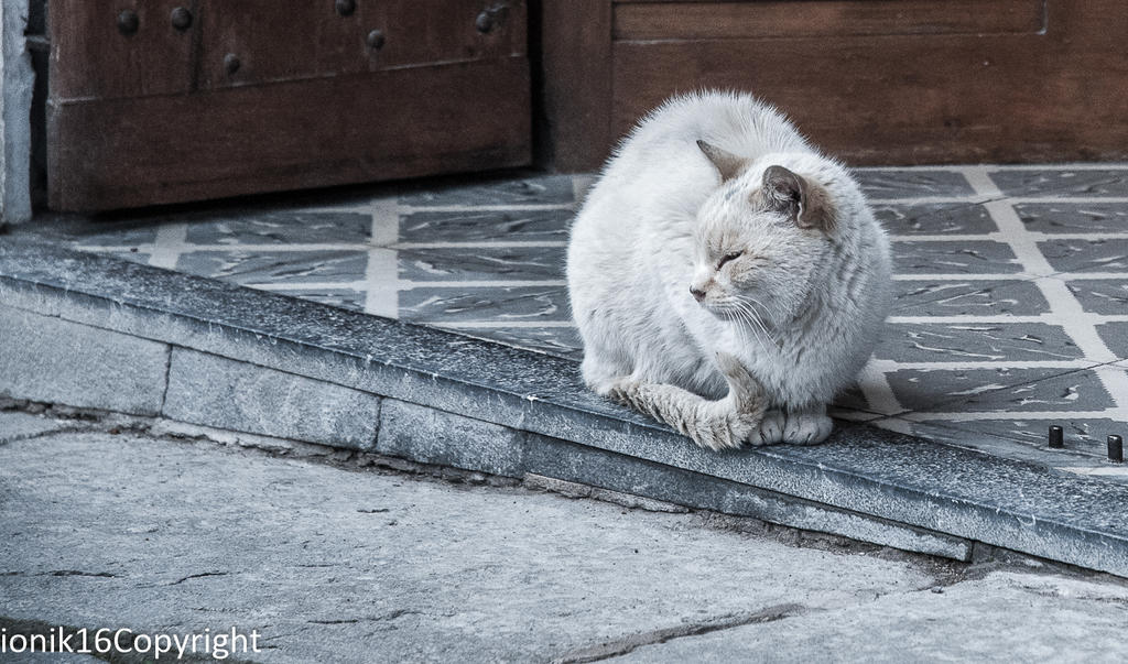 CAT.. by ionelat