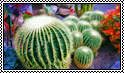 Barrel Cacti Stamp by jaynedarcy