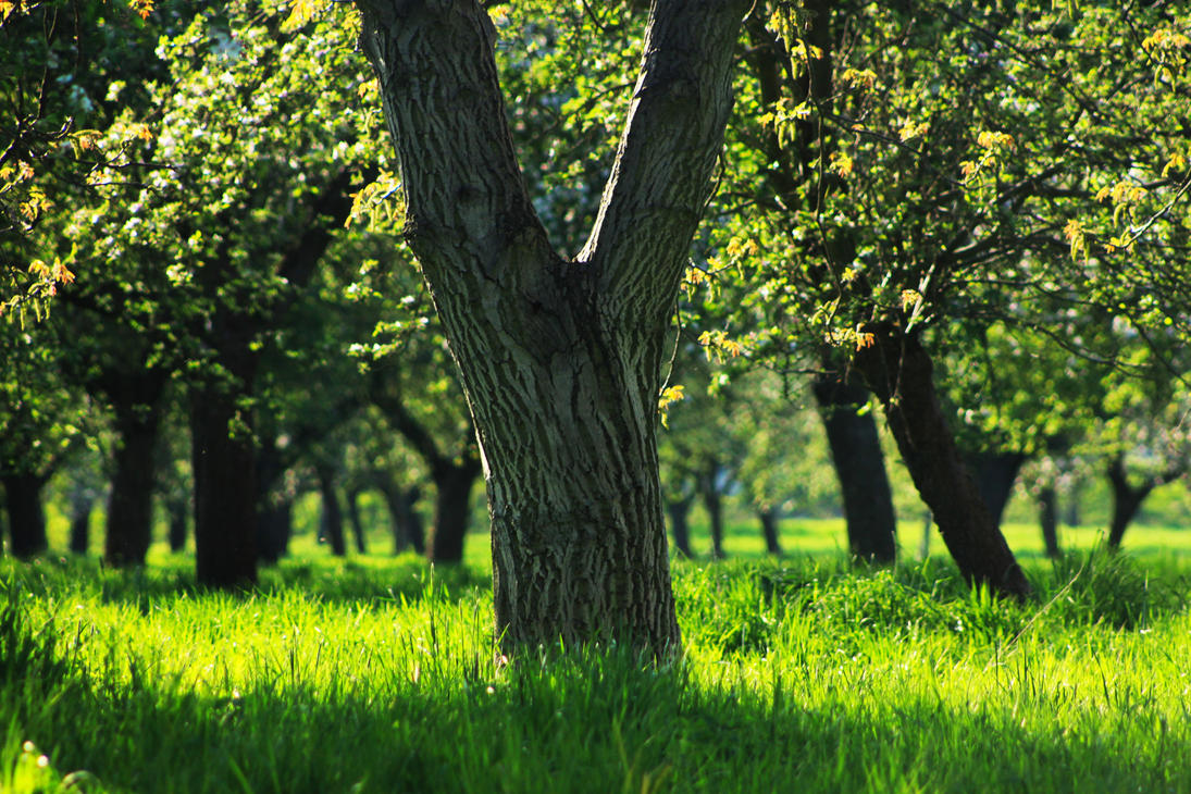 The Old Orchard by thevioletglamour