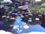 Lillipads