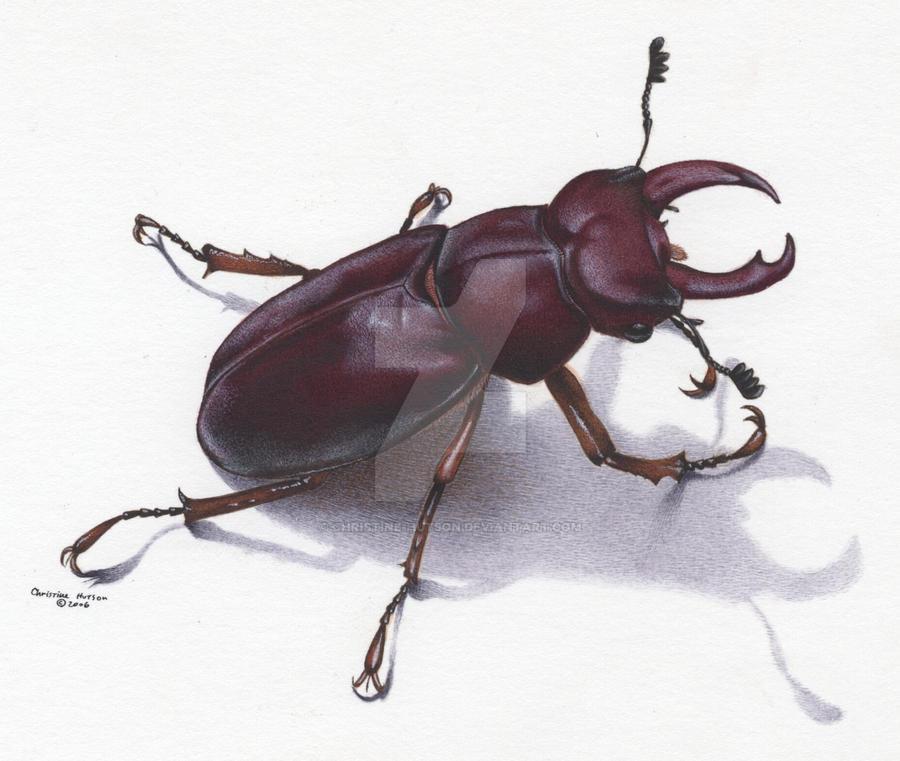 Bilen utmerket mekanisme: Stag beetle bite pictures