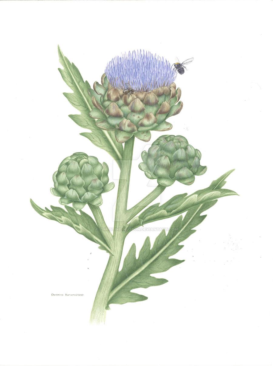 Artichoke - Bees