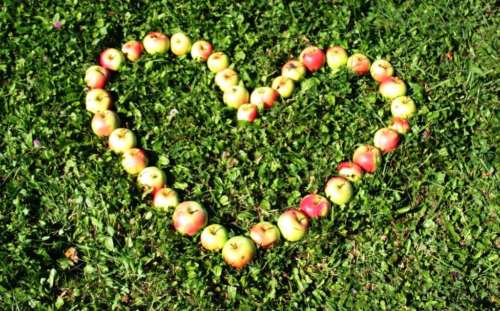 Apple heart by Shijakjin