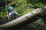 Shingeki no Kyojin: The Forest of Giant Trees