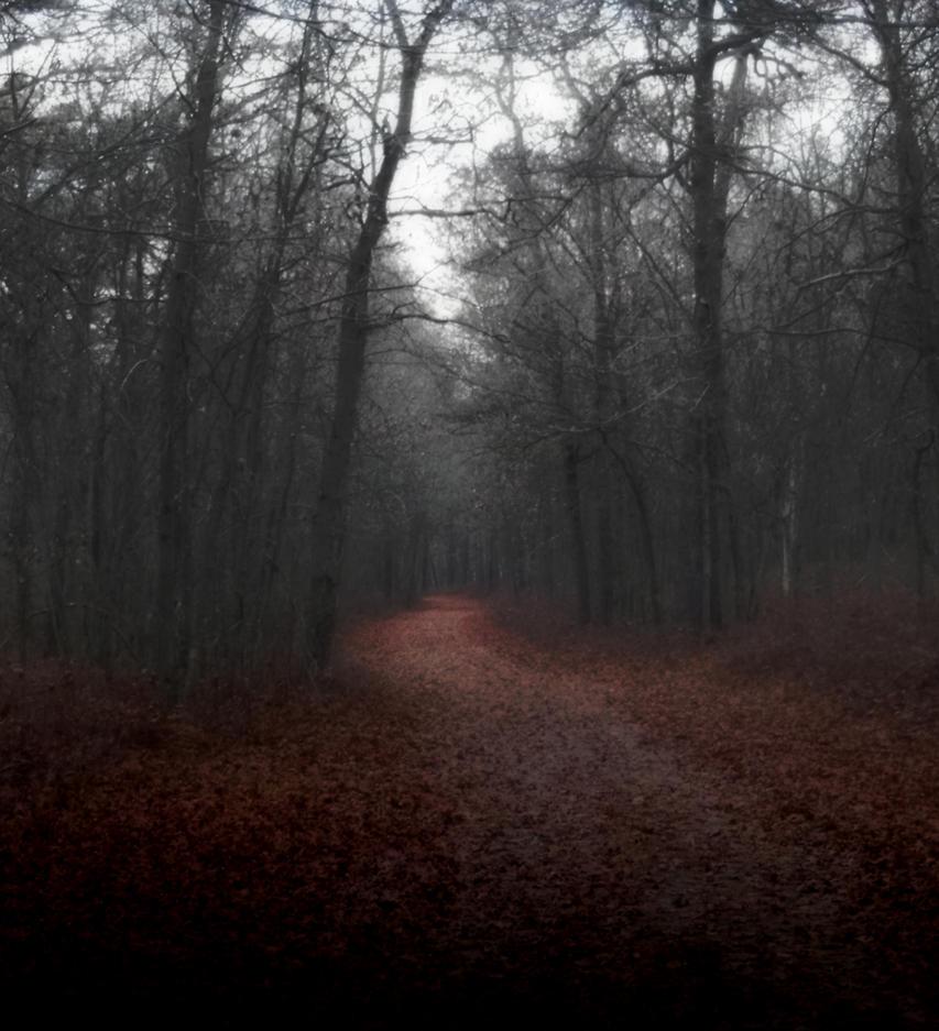 the foggy path by Kaleena127