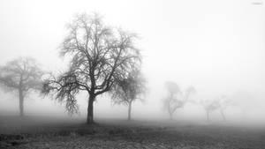 Pre Winter Fog by TAK-KAT
