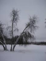fune-stock_winter_trees by Fune-Stock