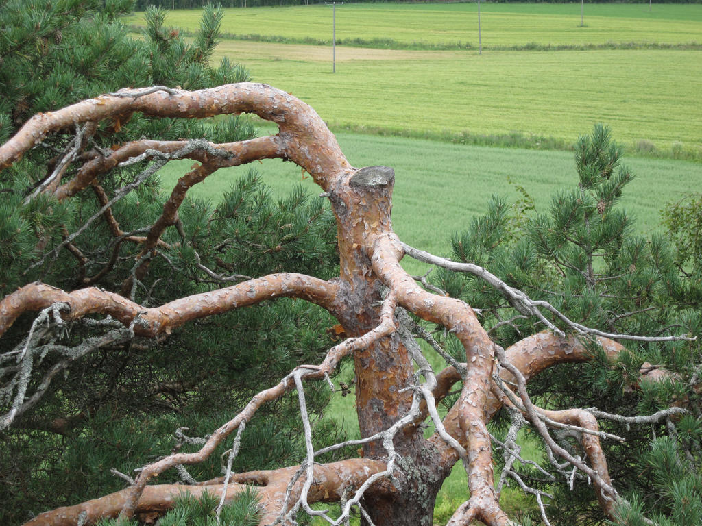 fune-stock_cut_tree2 by Fune-Stock
