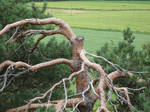 fune-stock_cut_tree2