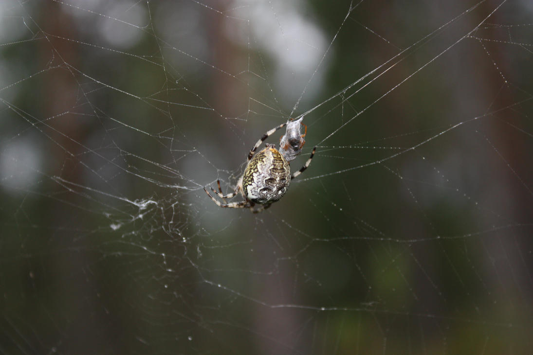 Spider by Litt1eNightmare