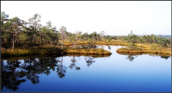 Kemeri national park by janky-lv
