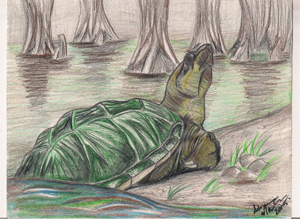 Common Snapping Turtle in color pencils. by valdrianth