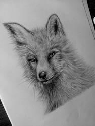 Fox by Anetta035