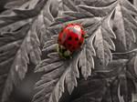 Isolated Ladybug