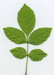 Weed / sapling