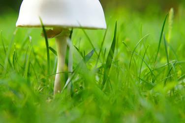 Mushroom in my Garden