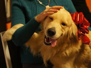 Golden Enjoying Christmas
