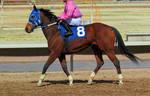 Racehorse Stock 13