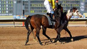 Racehorse Stock 67